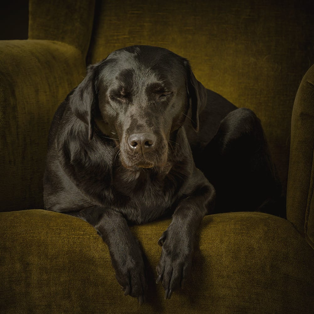 Preparation tips for your Dog's Photography session