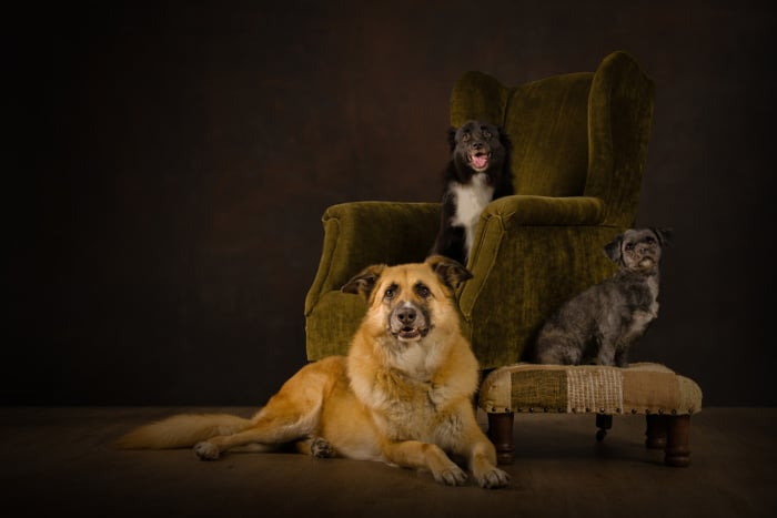 £10 Gift Voucher | JBS Dog Photography