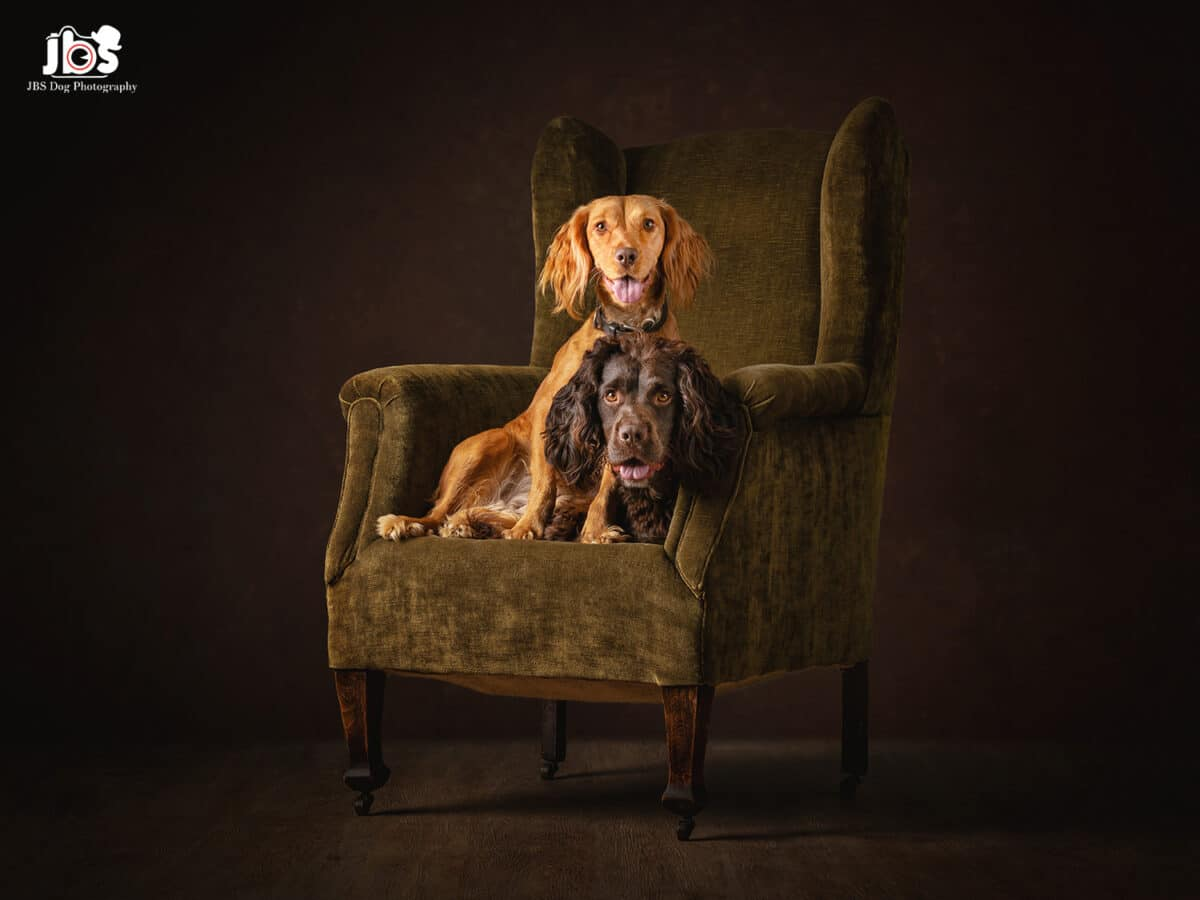 Dog Photography The Perfect Christmas Present | JBS Dog Photography