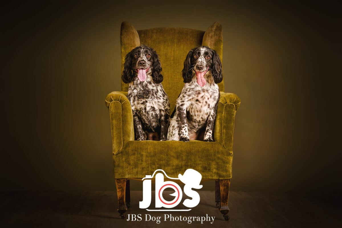 English Springer Spaniel Dog Photography | JBS Dog Photography