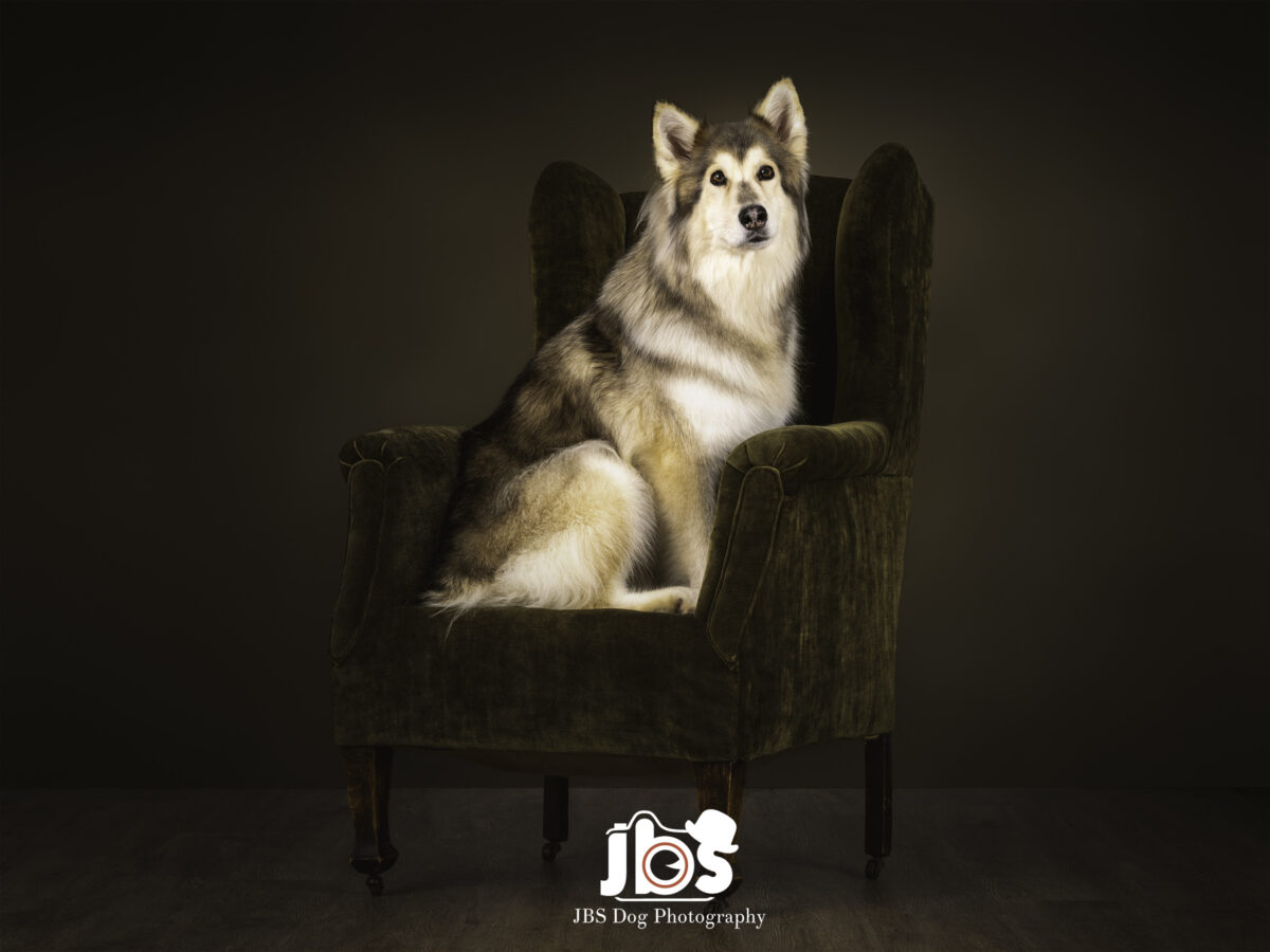 Utonagan Dog Photography | JBS Dog Photography