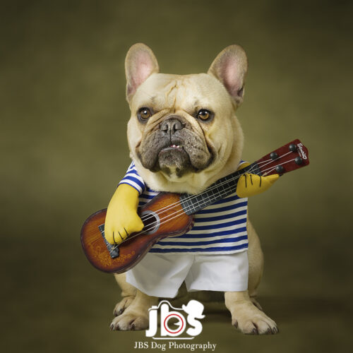 French Bulldog with Guitar