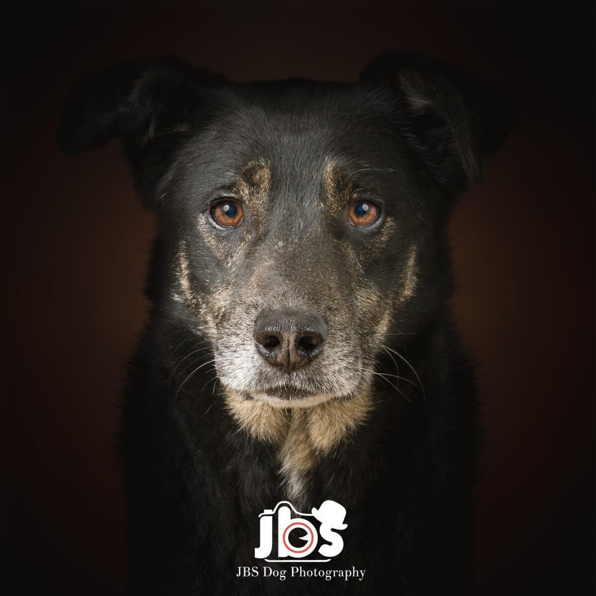 Rescue Dog Photography | JBS Dog Photography