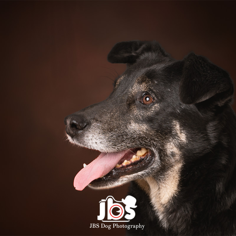 Home Page | JBS Dog Photography
